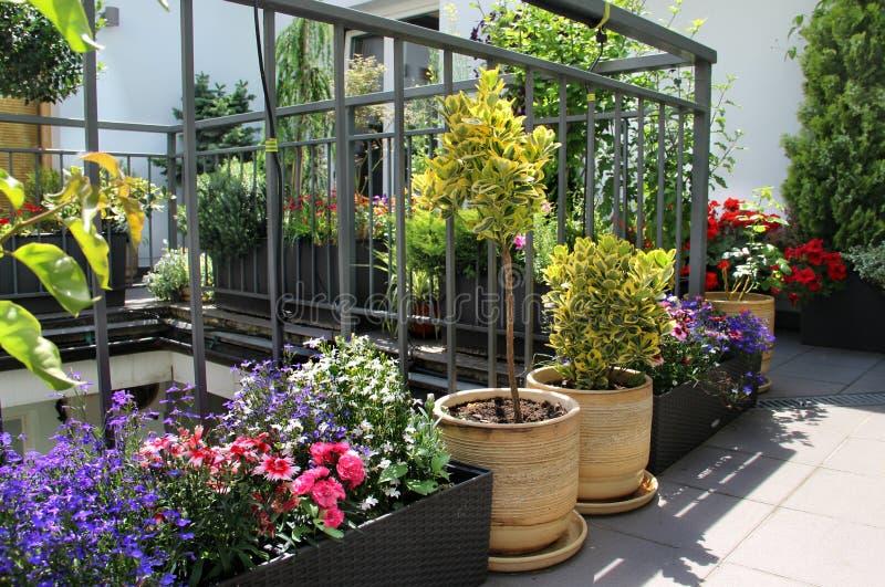 Den härliga moderna terrassen med blandningen av sommar blommar arkivbild