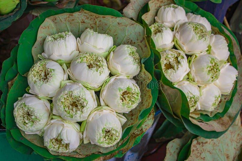 Den härliga näckrons eller den tropiska lotusblommablomman, gruppbukett slogg in i lotusblommablad royaltyfri fotografi
