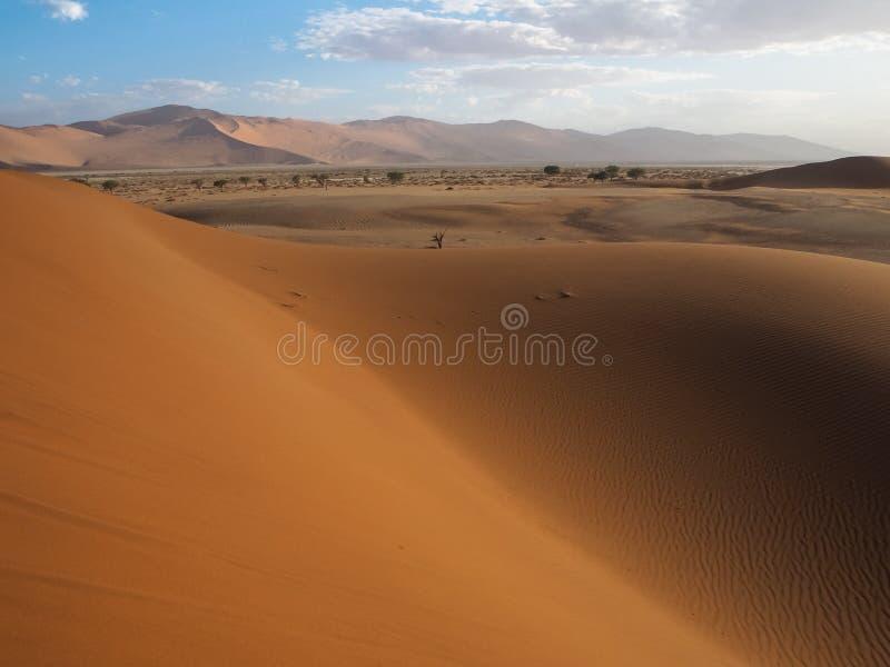 Den härliga naturliga rostiga röda sanddyn och saltar pannan av vidsträckt ökenlandskapcopyspace med varmt solljus, Sossus, den N royaltyfri fotografi