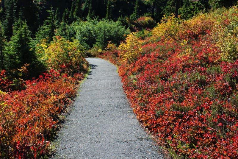 Den härliga nedgången färgar på Heather Meadows i monteringsbagaren Wilderness arkivfoton