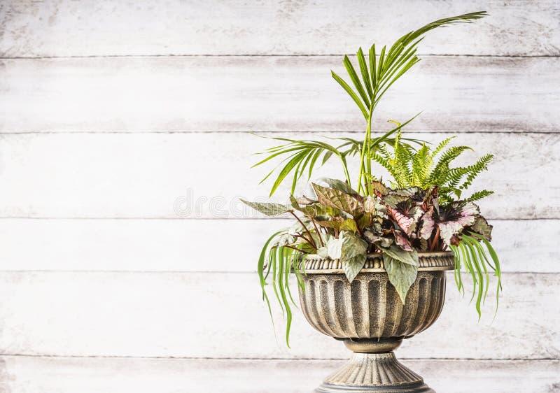 Den härliga ordningen för uteplatsurnaplanteren med den älskvärda växten av gömma i handflatan, gräs och bladbegonior på vit träb arkivfoton