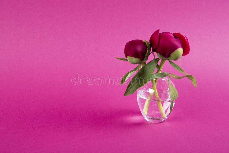 Den härliga pionen blommar i vas på mörk bakgrund arkivfoto