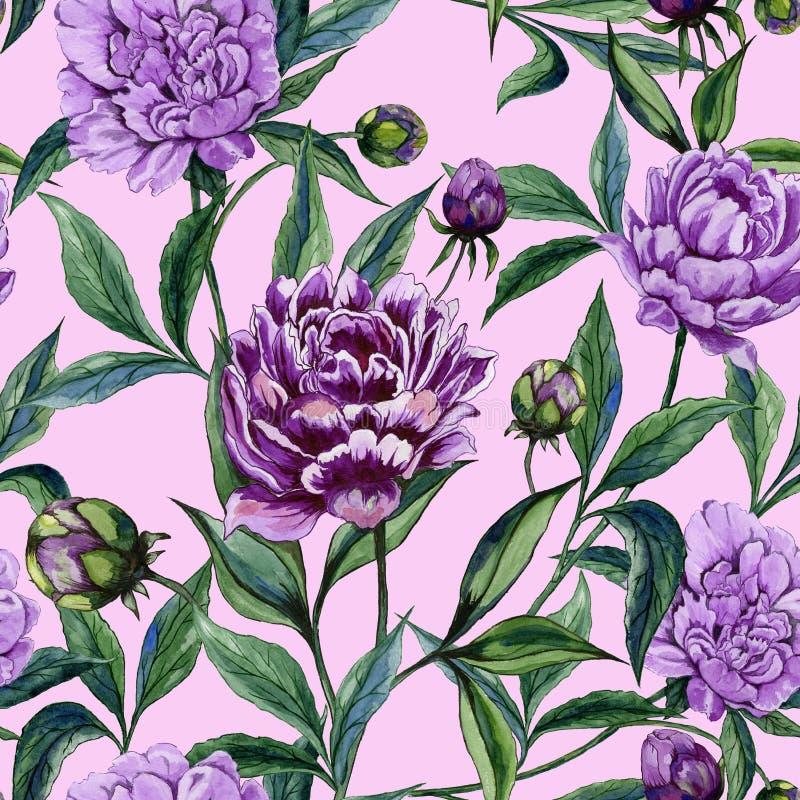 Den härliga purpurfärgade pionen blommar med gröna sidor på rosa bakgrund seamless blom- modell för Adobekorrigeringar hög för må stock illustrationer