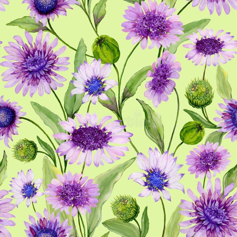 Den härliga purpurfärgade tusenskönan blommar med stängda knoppar och sidor på ljust - grön bakgrund Seamless fjädra mönstrar royaltyfri illustrationer
