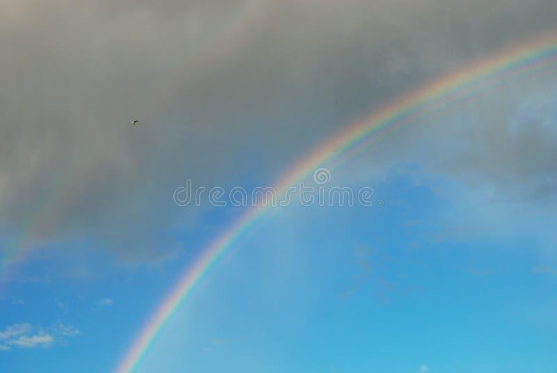 Den härliga regnbågen i den blåa himlen skimrar ljusa färger royaltyfria foton