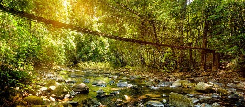 Den härliga regnskog- och landskapsikten av den långa upphängningbron i sol rays, Khao Sok National Park, Thailand royaltyfri fotografi