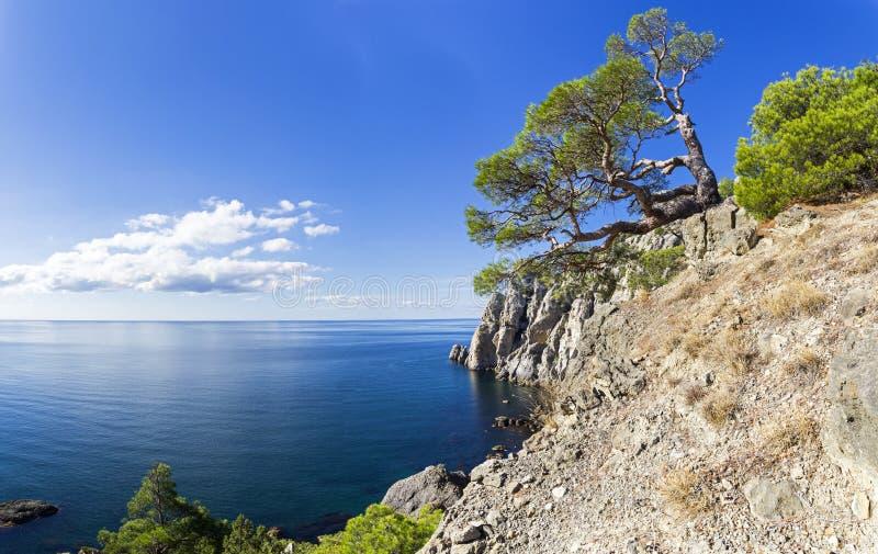 Den härliga relicten sörjer på en klippa ovanför havet arkivfoton