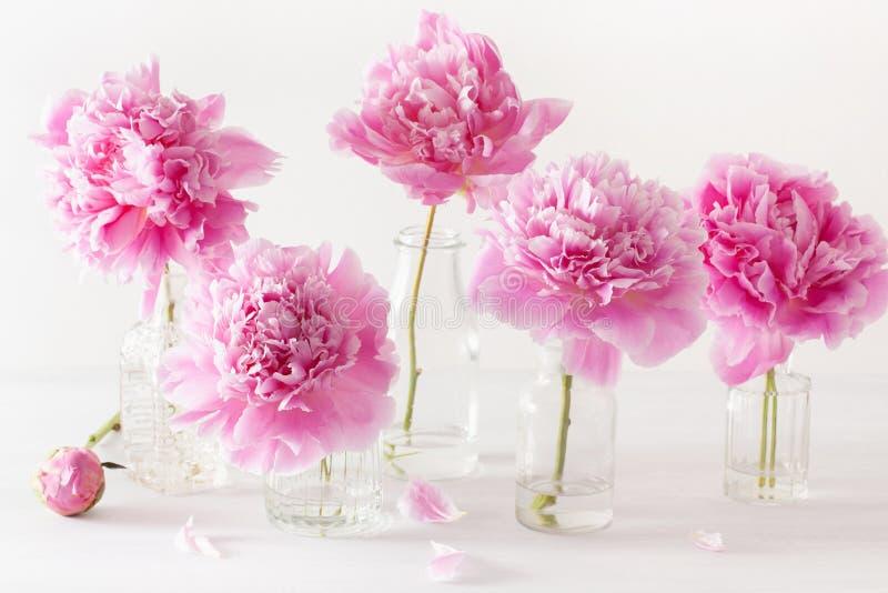 Den härliga rosa pionen blommar buketten i vas arkivfoton