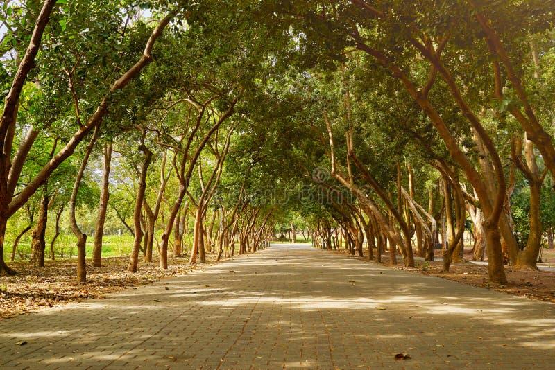 Den härliga sceniska gångbanan av Yizai parkerar omkring med träd i den Tainan staden arkivbilder