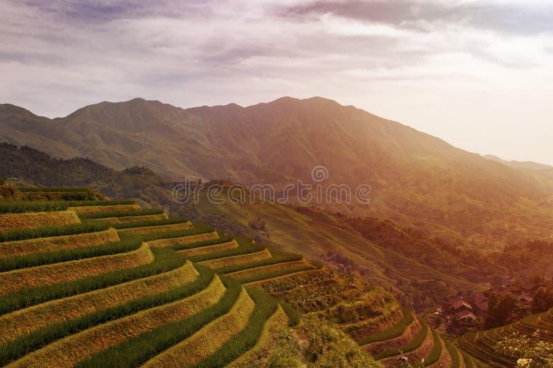 Den härliga sikten av de Longsheng risen terrasserar nära av den Dazhai byn i landskapet av Guangxi, i Kina arkivbilder