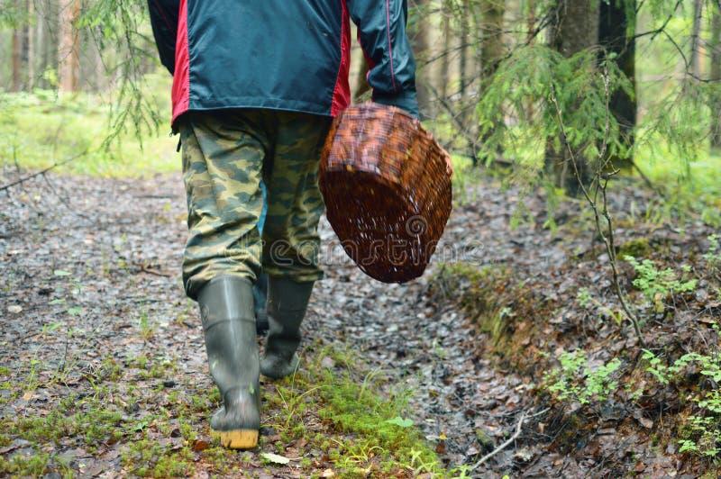 Den härliga sikten av den rena skogen för sommar reserverade lösa ställen arkivfoto