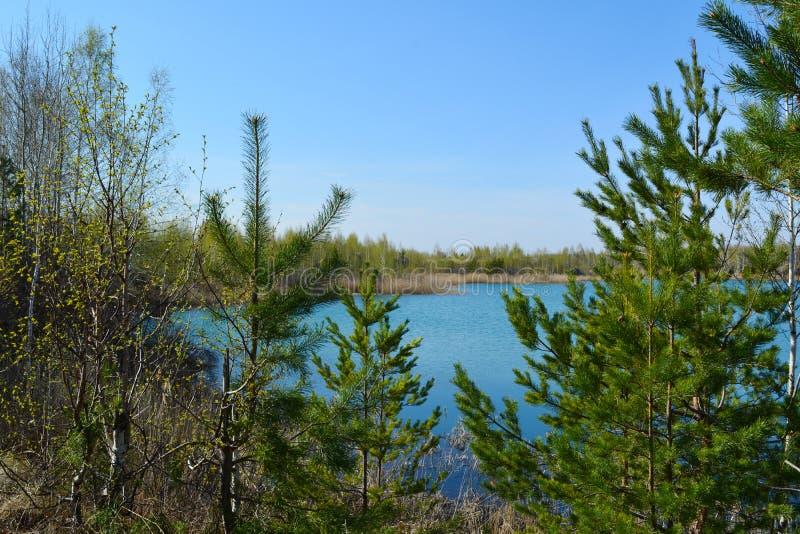 Den härliga sikten av sjön sörjer igenom träd Ryssen landskap arkivbilder