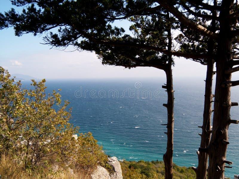Den härliga sikten från berg på sjösidastad nära Yalta, Krim, himmel, blått havsvatten, sörjer, gran, barrträd på vaggar fotografering för bildbyråer