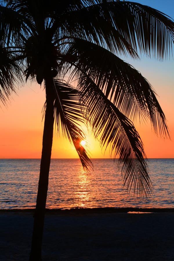 Den härliga solnedgången på stranden, sol går ner till havet Gömma i handflatan på bayshoren Omgivande stillhet, vilar och avkopp royaltyfria foton