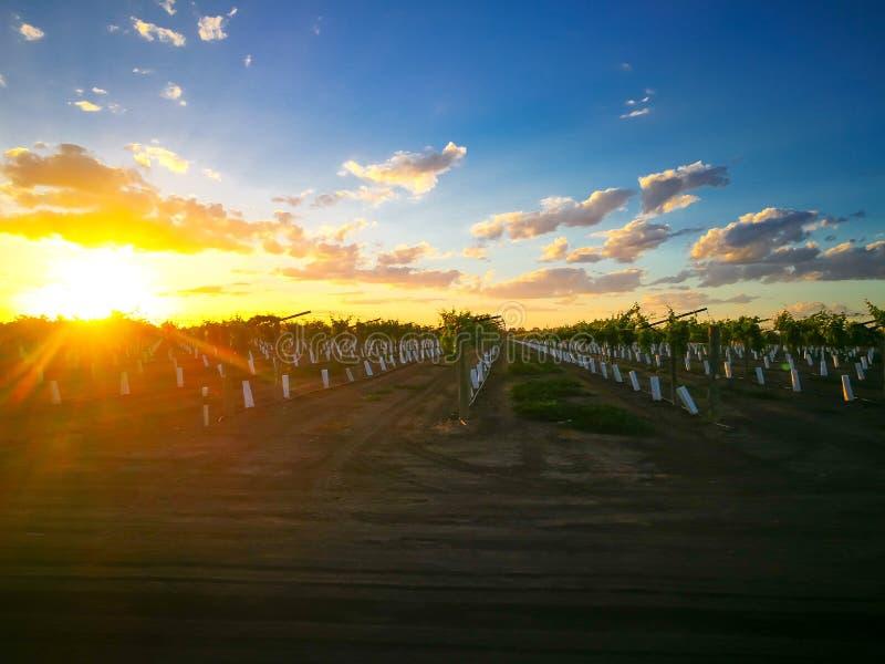 Den härliga soluppgånghimlen med moln på tidiga söta druvor som brukar i smaragden, Queensland, Australien arkivfoton