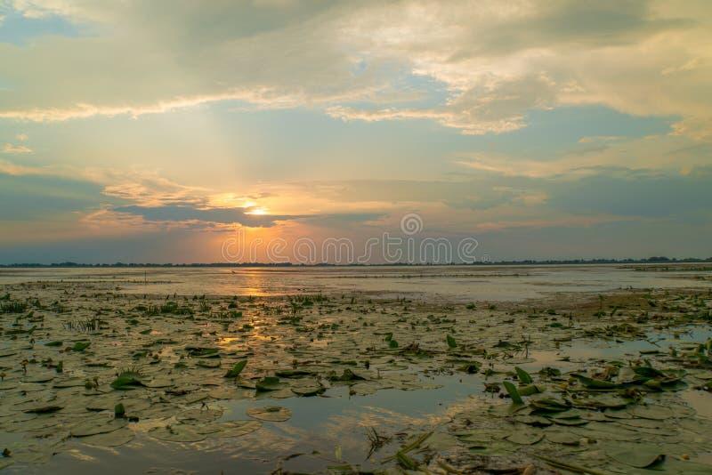 Den härliga sommarsolnedgången med solljus reflekterade i vattnet av en sjö royaltyfri foto