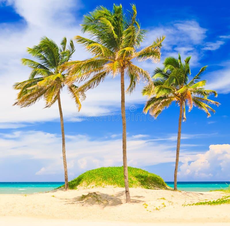 Den härliga stranden av Varadero i Kuba arkivfoton