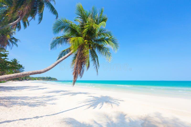 Den härliga stranden med kokosnöten gömma i handflatan arkivfoto