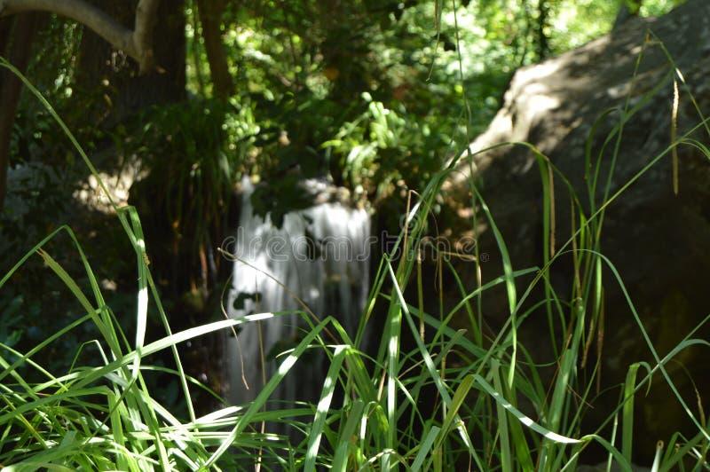 Den härliga suddiga bakgrunden av vattenfallet är synlig till och med det gröna gräset i förgrunden Solljusavbrott igenom royaltyfria bilder