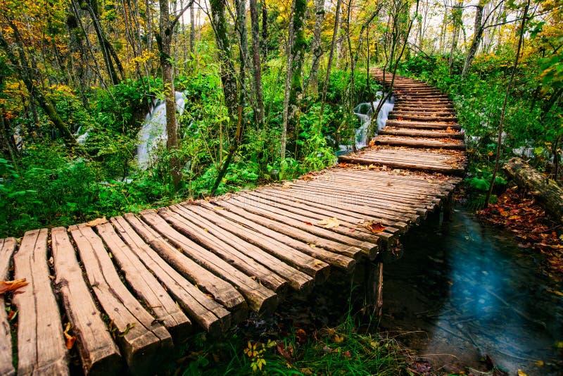 Den härliga träbrobanan i den djupa skogen över en turkos färgade vattenliten vik i Plitvice, Kroatien, UNESCO royaltyfria foton