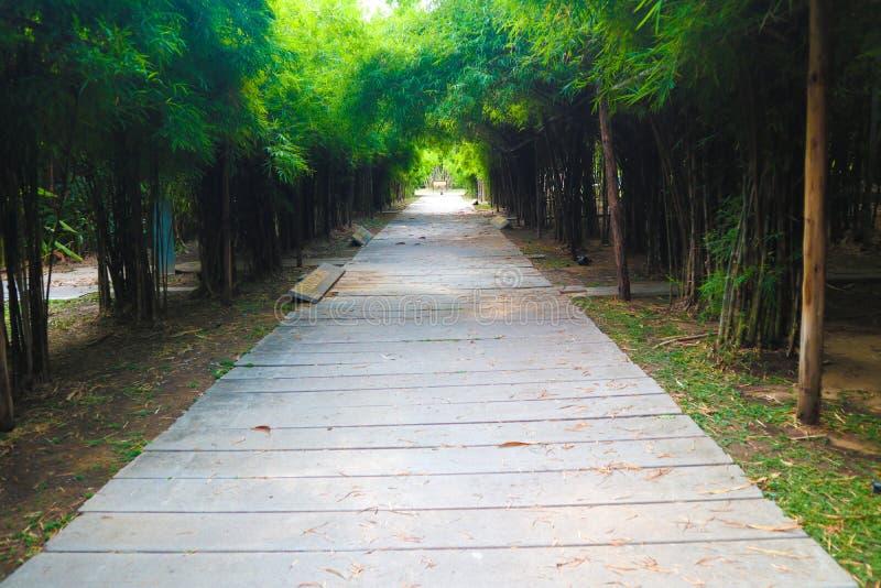 Den härliga träd- och bambutunnelen i det offentligt parkerar bakgrund och tapeten arkivfoton