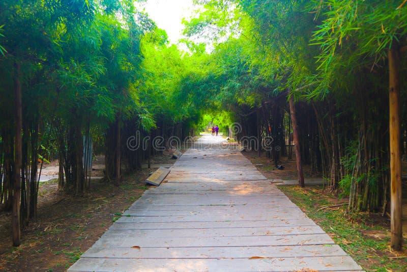 Den härliga träd- och bambutunnelen i det offentligt parkerar bakgrund och tapeten royaltyfri foto