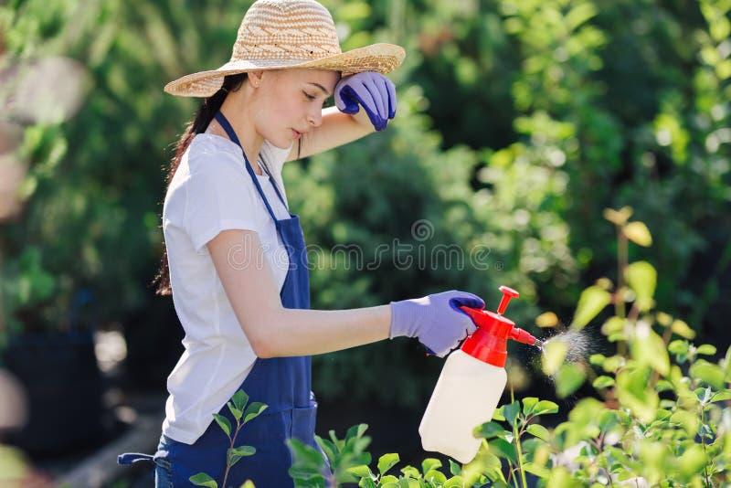 Den härliga trädgårdsmästarekvinnan i sugrörhatt strilar växter från en trädgårdsprejare royaltyfri foto