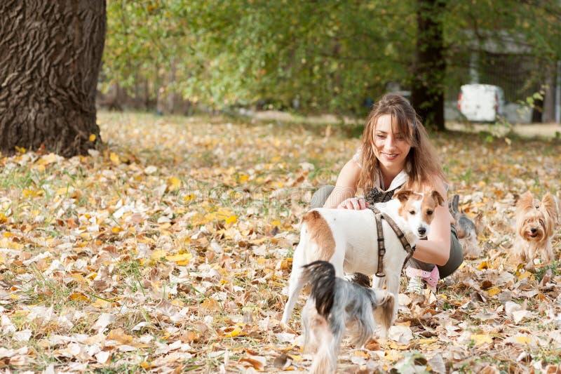 Den härliga unga flickan med hennes valp för hunden för den Yorkshire terriern som tycker om och spelar i höstdagen i, parkerar d arkivfoto