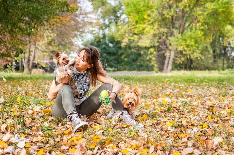 Den härliga unga flickan med hennes valp för hunden för den Yorkshire terriern som tycker om och spelar i höstdagen i, parkerar d royaltyfri fotografi