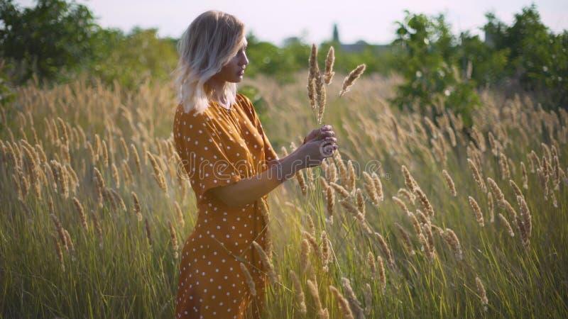 Den härliga unga kvinnan går i fältet samlar en bukett av blommor och spikelets Stående av den attraktiva kvinnlign på gräs på su royaltyfri foto