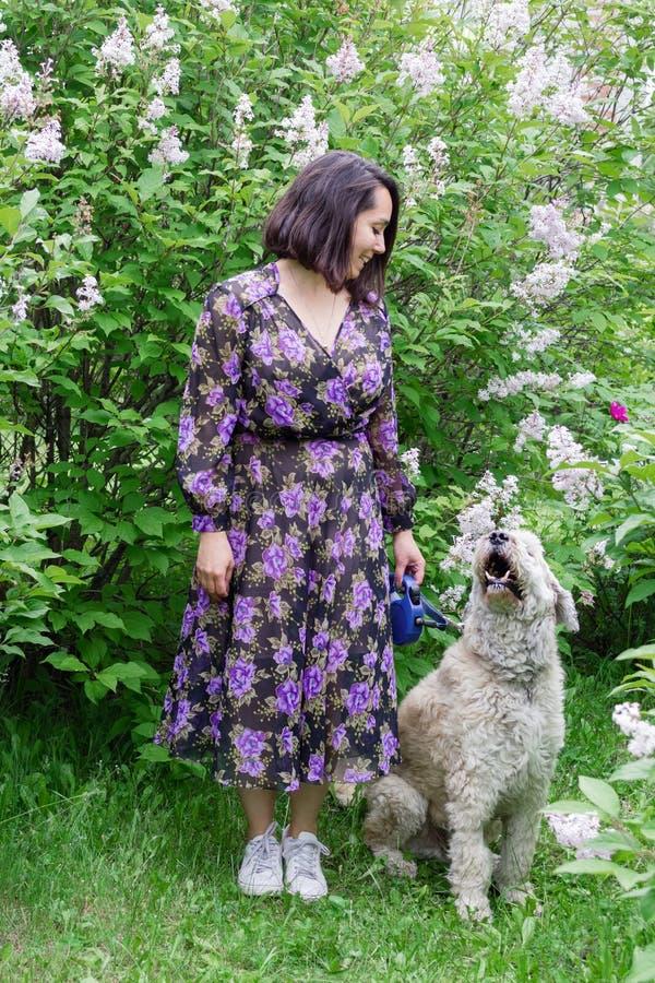 Den härliga unga kvinnan går med hennes södra ryska herde som Dog i en sommar parkerar med att blomma lila buskar arkivbild