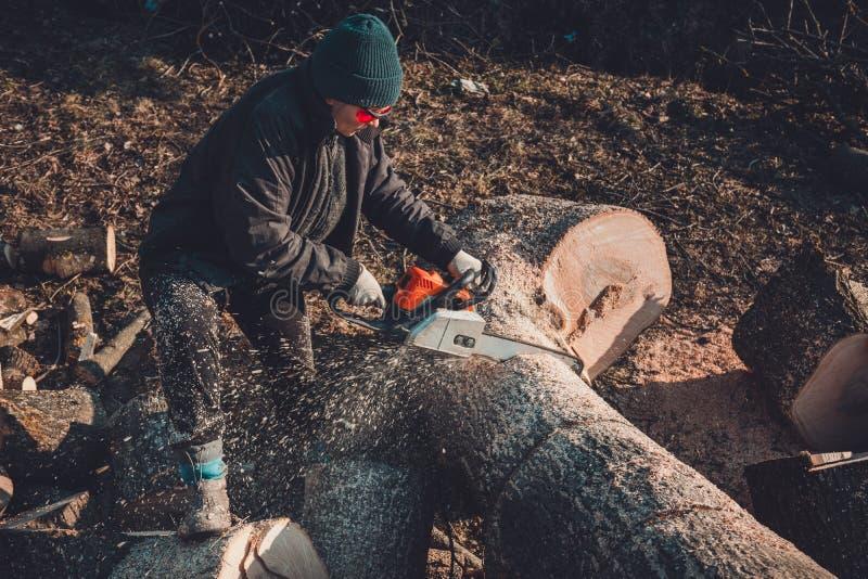 Den härliga unga kvinnan i exponeringsglas klipper ett stort träd av askaen på trä för vinter royaltyfria bilder
