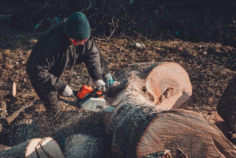 Den härliga unga kvinnan i exponeringsglas klipper ett stort träd av askaen på trä för vinter royaltyfria foton