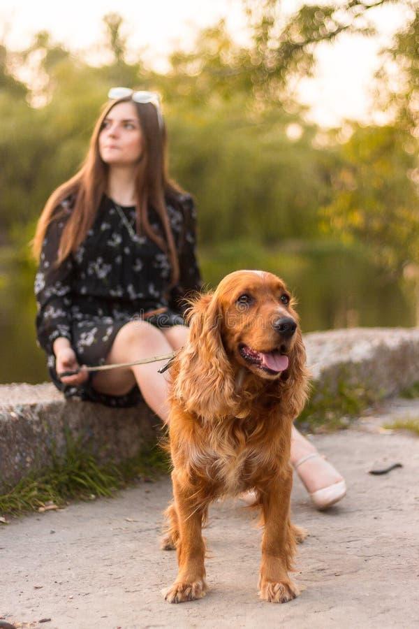 Den härliga unga kvinnan med rolig hunddet fria på parkerar Sommartid och solnedgång royaltyfria bilder