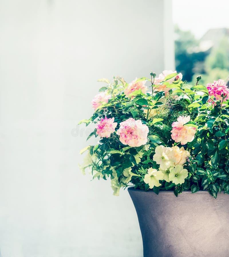 Den härliga uteplatskrukan med rosor och petunior blommar på balkong eller terrass Behållareplanter fotografering för bildbyråer