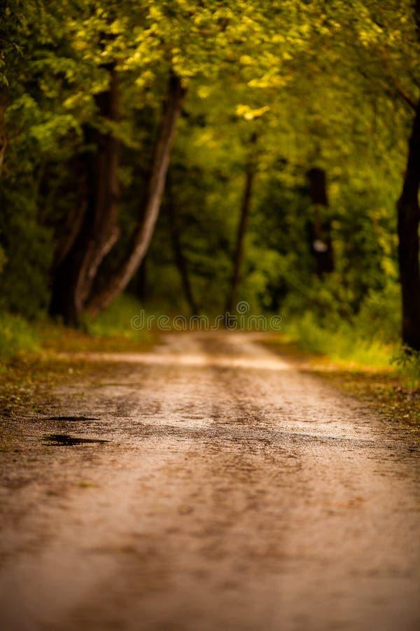Den härliga vägen i skogen med höst färgar royaltyfria foton