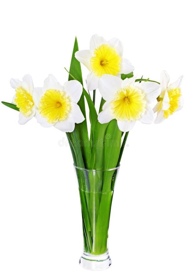Den härliga våren blommar i vas: guling-vit pingstlilja (Daffod arkivbild