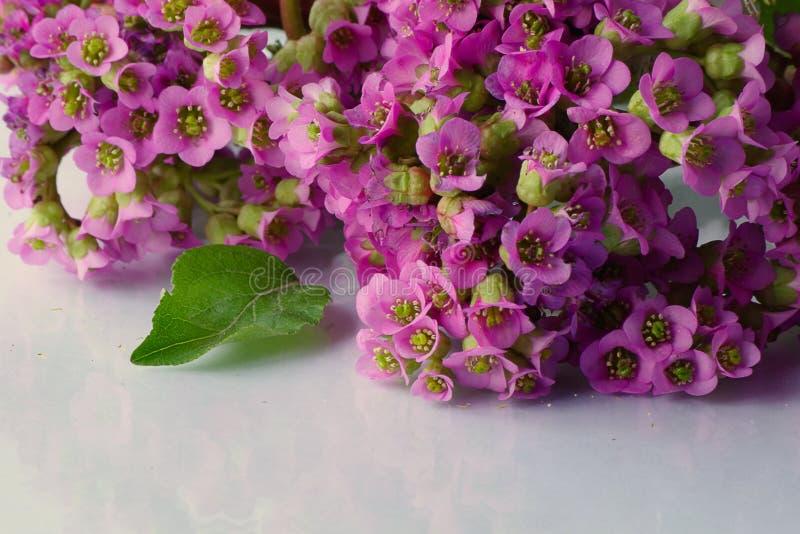 Den härliga våren blommar på vit royaltyfria bilder
