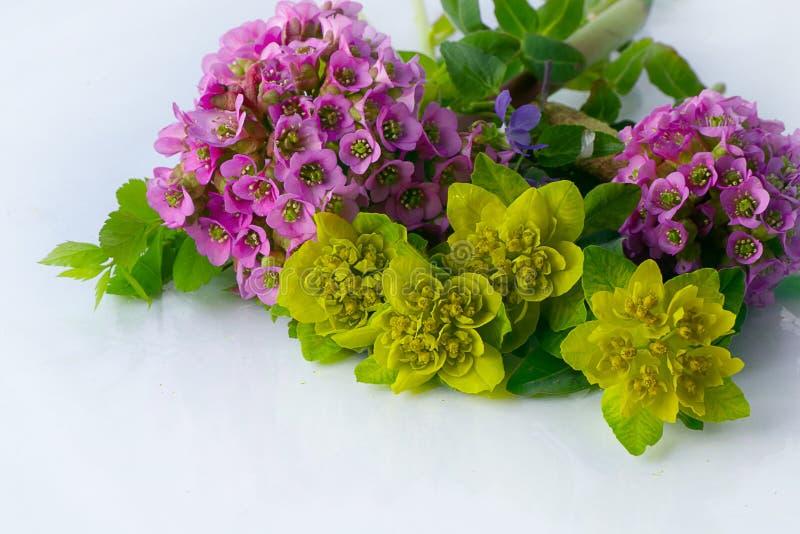 Den härliga våren blommar på vit royaltyfria foton