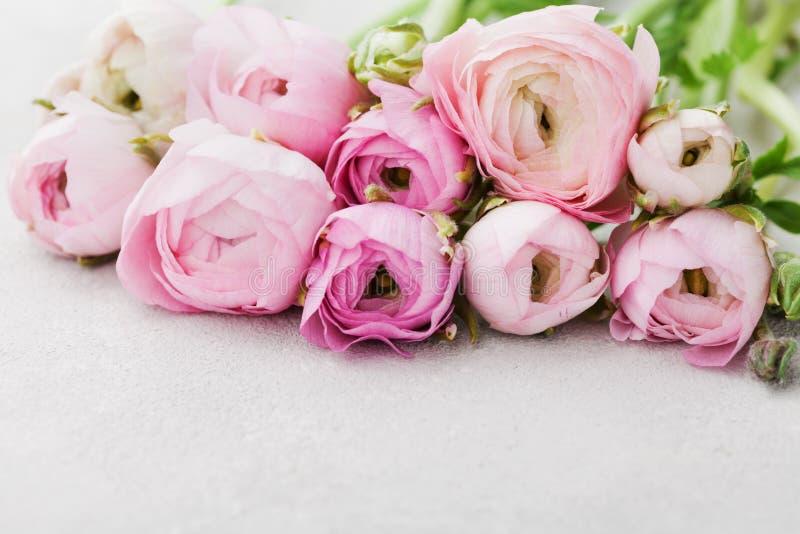 Den härliga vårranunculusen blommar på grå bakgrund blom- kant Pastellfärgad färg Hälsningkort för valentin eller kvinnas dag arkivfoto