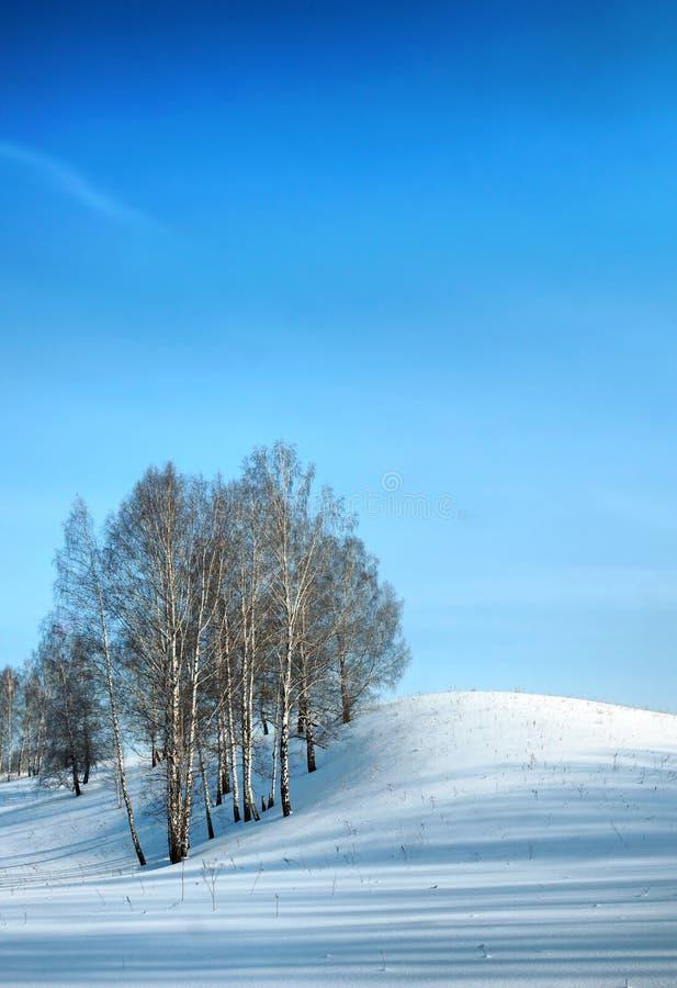 Den härliga vintern beskådar utomhus med björkträd på kullen arkivfoton