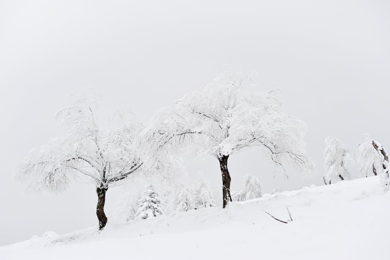 Den härliga vintern landscape arkivbilder
