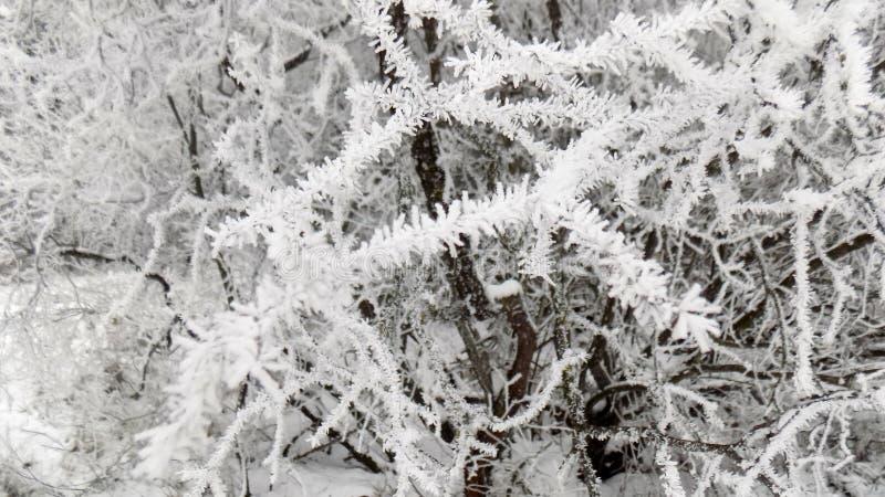 Den härliga vintern landscape Abstrakt mystisk skogbakgrund Landskap för skönhetfilialtapet fotografering för bildbyråer