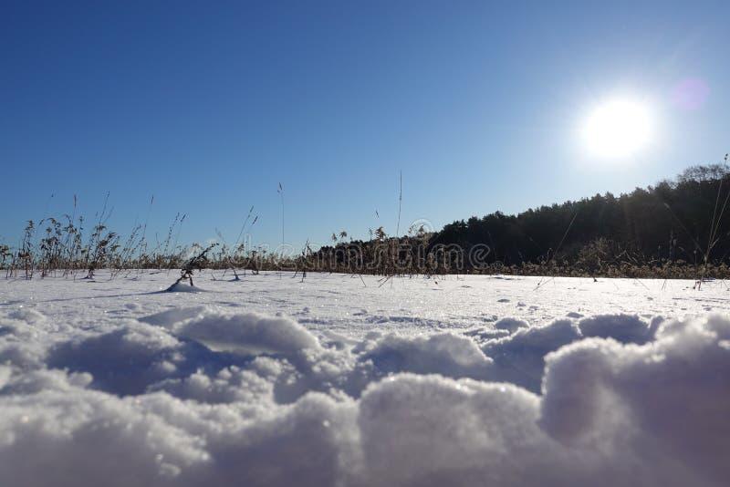 Den härliga vintern landscape ljus vintersol, briljant snö och drivor royaltyfri foto