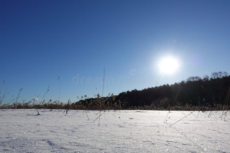Den härliga vintern landscape ljus vintersol, briljant snö och drivor fotografering för bildbyråer