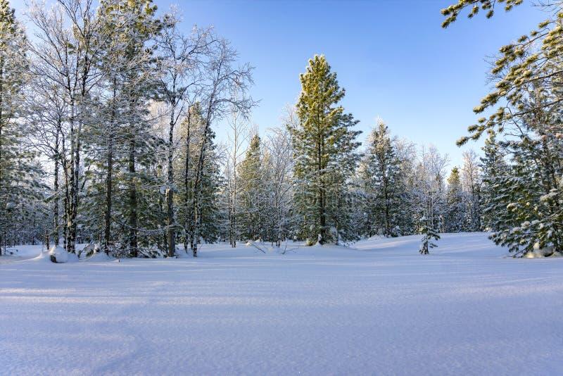 Den härliga vintern landscape Sagolik snö-täckt skog royaltyfri fotografi
