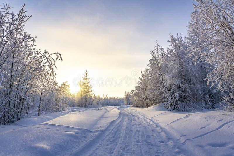 Den härliga vintern landscape Sagolik snö-täckt skog royaltyfri foto