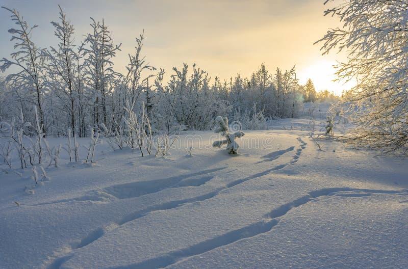 Den härliga vintern landscape Sagolik snö-täckt skog arkivbild