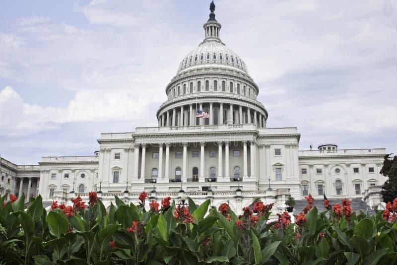 Den härliga Washington Capitol som inramas av ljusa röda blommor royaltyfri bild