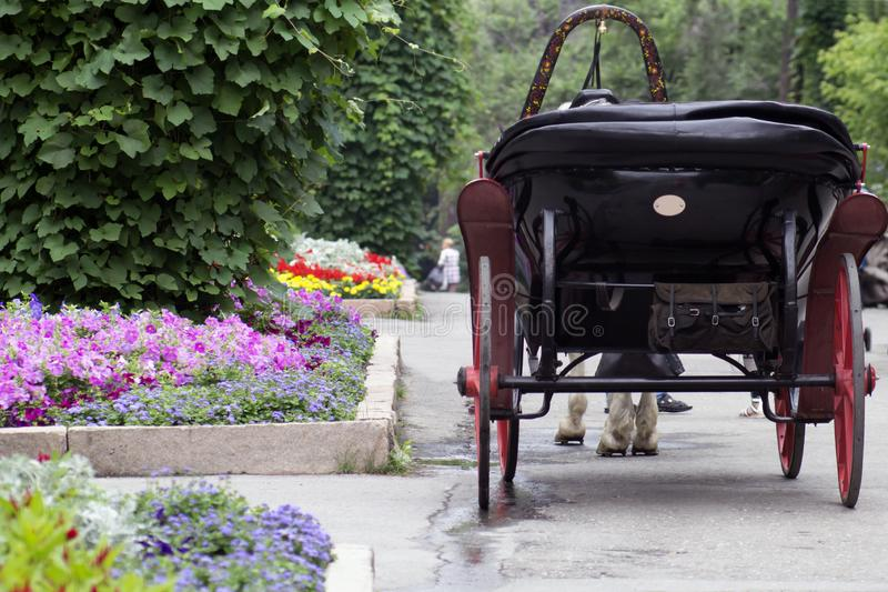 Den hästdragna vagnen i parkerar var många blommor royaltyfri foto